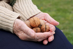 Holding walnuts Stock Images
