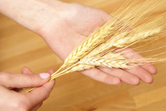 Holding Wheat Stock Photos