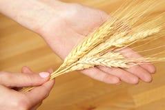 Holding Wheat Stock Photos