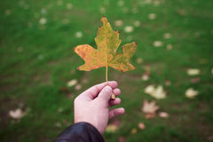 Holding a yellow dry leaf. Royalty Free Stock Images