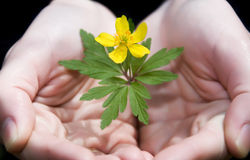 Holding a yellow flower Royalty Free Stock Images