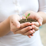 Holding young plant. Young woman holding young plant in her hands royalty free stock photos
