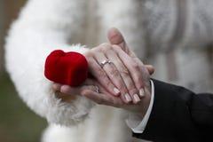 Holdinghände mit Hochzeitsringen Stockfoto