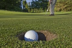 In the Hole. A golfer sinks a long putt and watches the ball dive into the hole Stock Photography