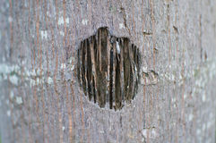 The hole on the bark tree Royalty Free Stock Images