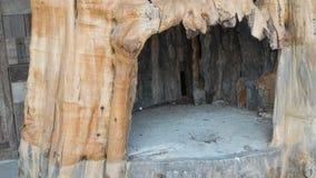 Hole in the big tree. Big hole in the big tree royalty free stock photos