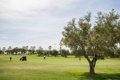 18 hole golf course with golfers and olive tree in Spain stock photography