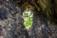 Hole in the hollow trunk royalty free stock photography
