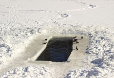 Hole in the ice for winter swimming Royalty Free Stock Photos