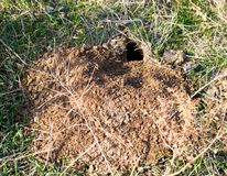 Hole Mole in the ground stock image