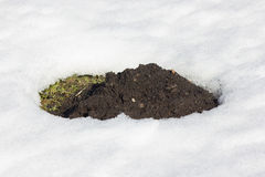 Hole of a mole. Hole of a mole in melting snow stock photos