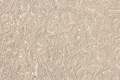 Hole of Ocypode ceratophthalma crab on a sandy. Footprints on horizontal landscape hole of Ocypode ceratophthalma crab on a sandy beach use for background Stock Photo
