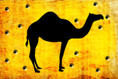 Hole from shoot on with camel Royalty Free Stock Photo