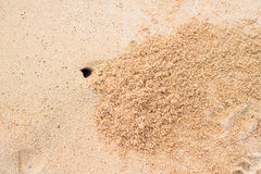 Hole of small crab and sand beach Royalty Free Stock Photography