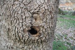 Hole in tree Royalty Free Stock Image