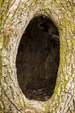Hole In A Tree Stock Image
