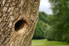 Hole in tree trunk Stock Images