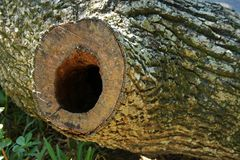 HOLE IN TREE TRUNK. Felled tree trunk with opening under cut branch Stock Photography