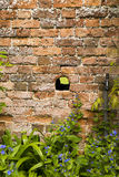 Hole in wall Royalty Free Stock Photos