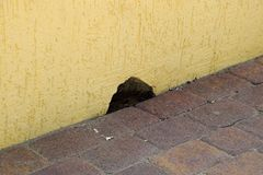 Hole in the wall near the floor. The mouse mink Royalty Free Stock Image