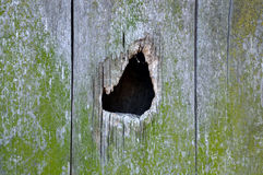 A hole on the wooden mossy wall. A hole on the old wooden mossy wall royalty free stock images