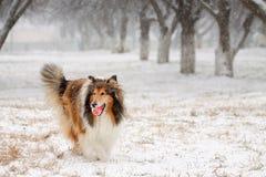 Holen eines Balls im Winter Stockfotos