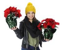 Holen von Poinsettia-Geschenken Lizenzfreies Stockfoto