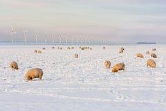 Holendera krajobraz z windturbine i cakle w śniegu zakrywaliśmy łąkę obraz stock