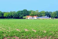 Holenderscy dom wiejski upraw patatoes odpowiadają plantację, holandie Zdjęcie Stock