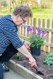 Holenderska starsza kobieta zasadza garnek ro?liny w ogr?dzie obrazy royalty free