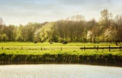 Holenderska wiosna Zdjęcia Royalty Free