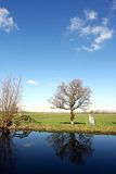 holenderska ziemia uprawna Zdjęcia Stock