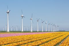 Holenderska ziemia uprawna z żółtym tulipanu śródpolnym i dużym windturbine Obrazy Royalty Free