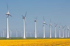 Holenderska ziemia uprawna z żółtymi tulipanów śródpolnymi i dużymi windturbines Obrazy Stock