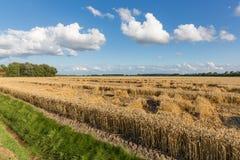 Holenderska ziemia uprawna z pszenicznym polem i cloudscape Zdjęcie Stock