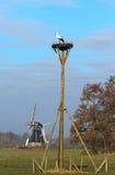 Holenderski biały bocian Zdjęcia Stock