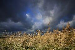 Holenderski chmurny krajobraz Obraz Royalty Free