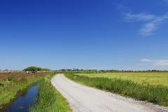 Holenderski kraju krajobraz na jasnym słonecznym dniu Zdjęcie Stock