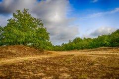 Holenderski parka narodowego Loonse en Drunense Duinen z grożeniem zdjęcia stock
