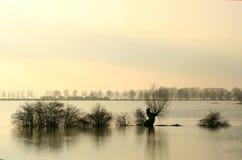 holenderski utonął na pierwszy plan wyląduje drzewa Obrazy Stock