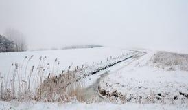 holenderski wczesny krajobrazowy morining mgły śnieżny Zdjęcie Stock
