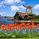 Holenderski wiatraczek Zaanse Schans Obrazy Royalty Free
