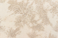 Holes of ghost craps on beach Stock Images