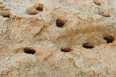 The holes nests dug by birds in slopes. In Kulikovo, Kaliningrad region stock photo