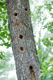 Holes tree birds woodpecker Stock Photos