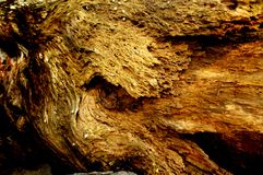 Holey abstrakt gammal trädstam arkivbilder
