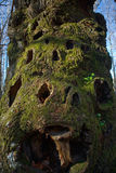 Holey stump trunk Stock Photos