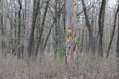 Holey Tree Trunk stock photo