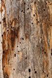 Holey wood planks Stock Photos