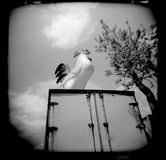 Holga Plastic Chicken in the Sky Stock Photo